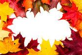 Marco del arce rojo y amarillo hojas — Foto de Stock