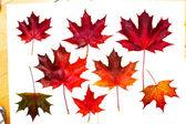 Conjunto de hojas de otoño hermosas. — Foto de Stock