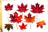Set of beautiful autumn leaves — Stockfoto