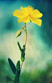 Gelbe Blume in blau-grün-Umgebung — Stockfoto