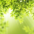 Green leaves background — Stock Photo #12055611