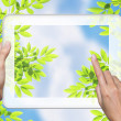 Hand touch tablet pc. screen with leaf — Stock Photo