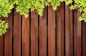 Leaf over wooden wall — Stock Photo