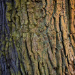 Colorful bark. — Stock Photo #11712330