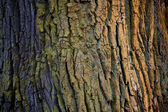 Colorful bark. — Stockfoto