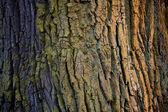Colorful bark. — Stock Photo