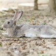 Rabbit — Stockfoto #12364338