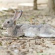 Foto Stock: Rabbit