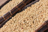 Coffee beans dried processing — Stock Photo