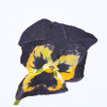 Dry flower — Stock Photo