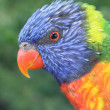 Stock Photo: Colorful lorikeet