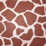 Giraffe — Stock Photo #11245923