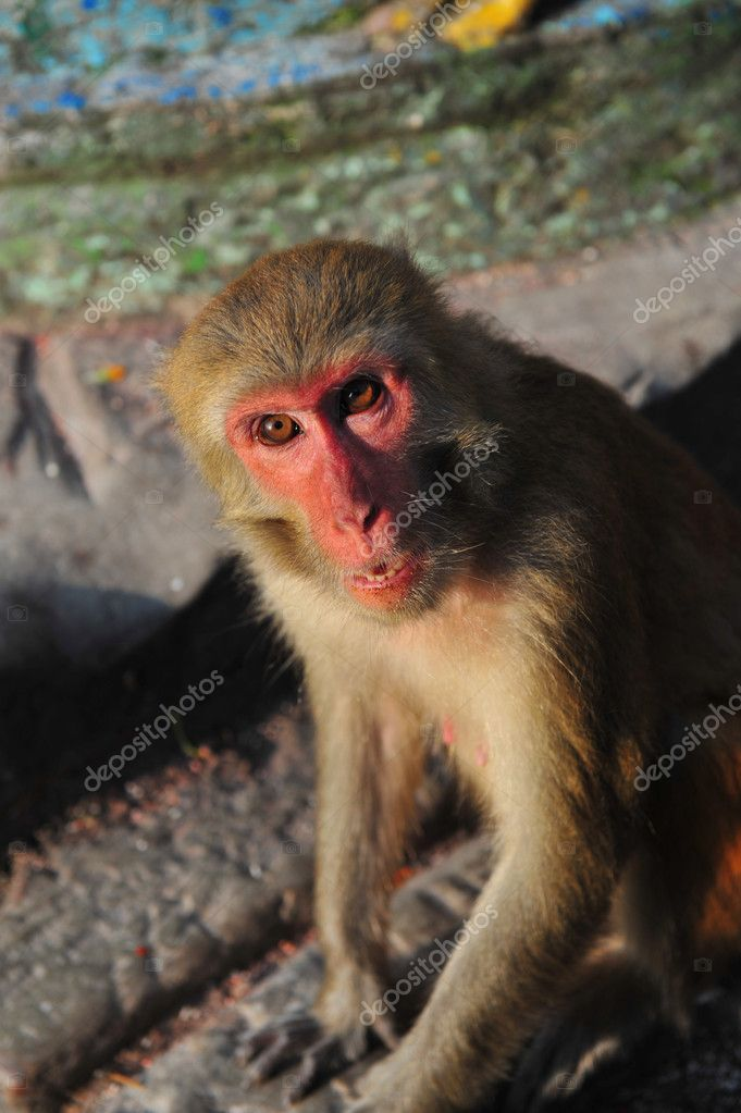 Macaque in Swayambhunath, Kathmandu, Nepal — Stock Photo #11636395