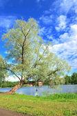 Lake's tree — Stock Photo