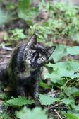 猫. — ストック写真