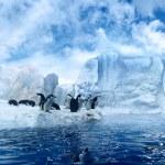 Penguins on ice floe — Stock Photo