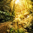 Ancient jungle path — Stock Photo