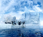 Penguins on ice floe — Stockfoto