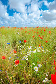 Wild flower meadow — Stock Photo