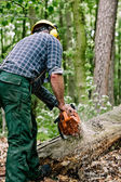 Lumberjack working with chainsaw — Stock Photo