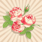 The pink peonies on the light background — Stockvektor