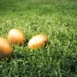 Big golden eggs on the grass to represent wealth and luck — Stock Photo
