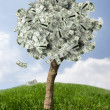 Stock Photo: Amazing money tree on grass with falling leaves