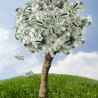 Amazing money tree on grass with falling leaves — Stock Photo