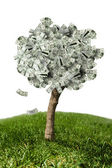 Amazing money tree on grass and white background — Stock Photo