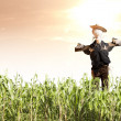 Scarecrow in corn field at sunrise — Stock Photo