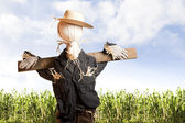 Scarecrow in corn field on a sunny day — Stock Photo