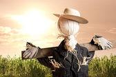 Scarecrow in corn field at sunrise — Stock Photo