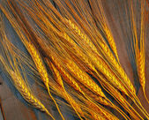 Dried wheat on a wooden box with warm light. — Stock Photo
