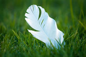 White feather on grass — Stock Photo