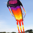 Giant Kite — Stock Photo