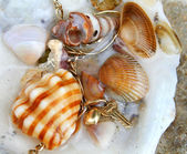 Seashells 1 — Stock Photo