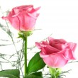 Pink Roses — Stock Photo #11570249