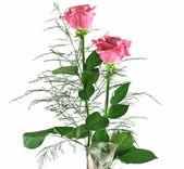 Gift Roses 4 — Stock Photo