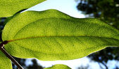 Rainforest Background 1 — Stock Photo