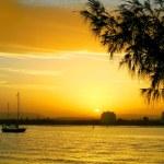 Sunset Against Casuarina — Stock Photo
