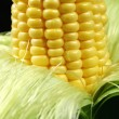 Kernels On An Ear Of Corn — Stock Photo