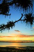 Sunrise mot pandanus — Stockfoto