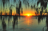 Casuarina Sunrise — Stock Photo