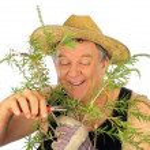 Pruning Gardener — Stock Photo #11776824