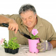 Nurseryman Plants Seedlings — Stock Photo