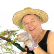 Sawing Gardener — Stock Photo