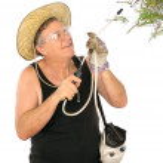 Gardener Spraying Plants — Stock Photo