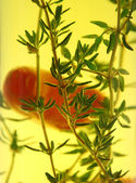 Suspended Chillies And Thyme — Stock Photo