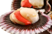 Sea Scallops — Stock Photo