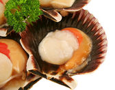 Fresh Sea Scallop — Stock Photo